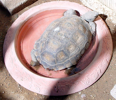 Provide a shallow water dish that is wide enough for your desert